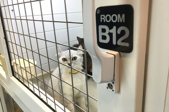 Pet hotels offer standard and VIP rooms where pets are fed three times a day. Photo by VnExpress/Dat Nguyen