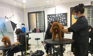 Pet Tet: Brisk Lunar New Year business for pet services