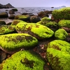 The unique moss-covered rocks of Eo Gio bay