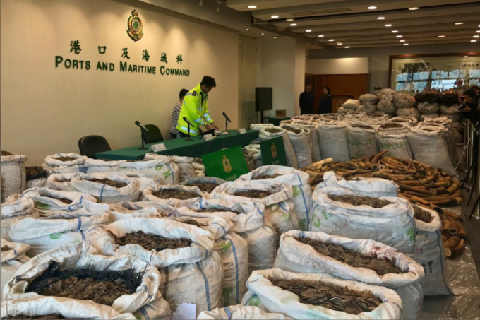 Hong Kong customs seize record haul of pangolin scales bound for Vietnam