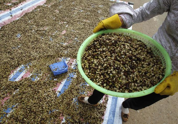 Asia Coffee: Vietnam shipments seen halted on holiday; Indonesia trade quiet