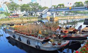 A river of flowers floats to Saigon for festive season