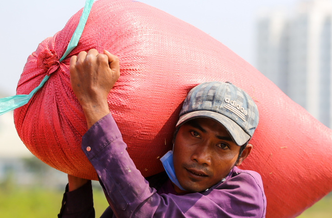 How some Mekong Delta farm workers earn extra cash - 6