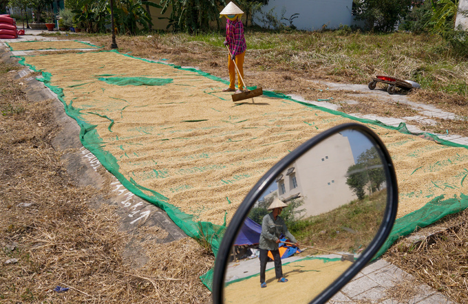 How some Mekong Delta farm workers earn extra cash - 8