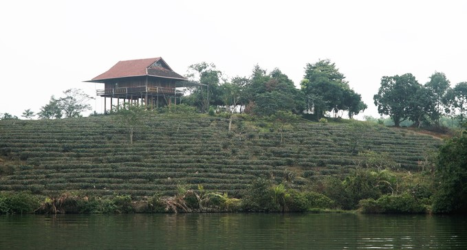 A rare boat cruise through tea estate islands in Vietnam - 11