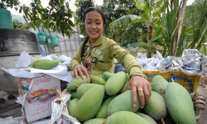 US opens doors to Vietnamese mango after 10 years of knocking