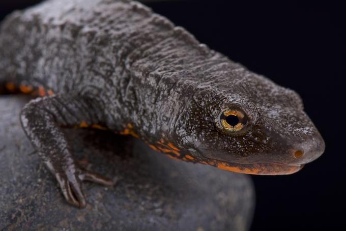 Vietnam seeks CITES help to protect endangered reptiles