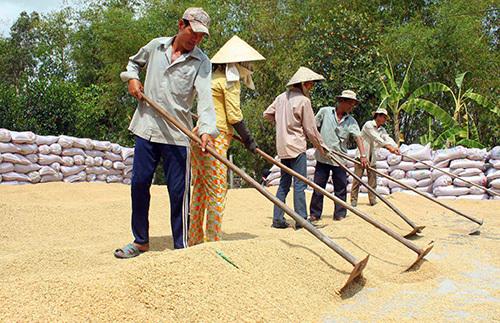 Rice exports slump, food association seeks government help