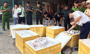 Cat meat on Vietnam bus headed for local pubs: police