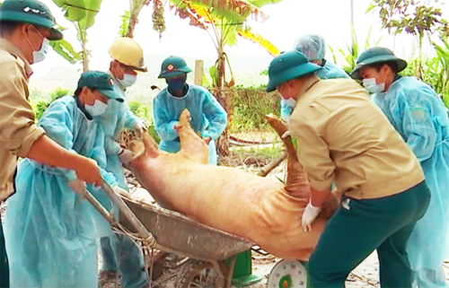 'Unpredictable' African swine fever spreads to two more Vietnamese provinces