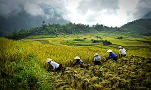 For its own good, Vietnam should stick to agriculture