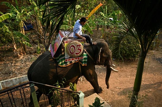Mahout Y Hoi Bya rides his elephant Kham Sinh.
