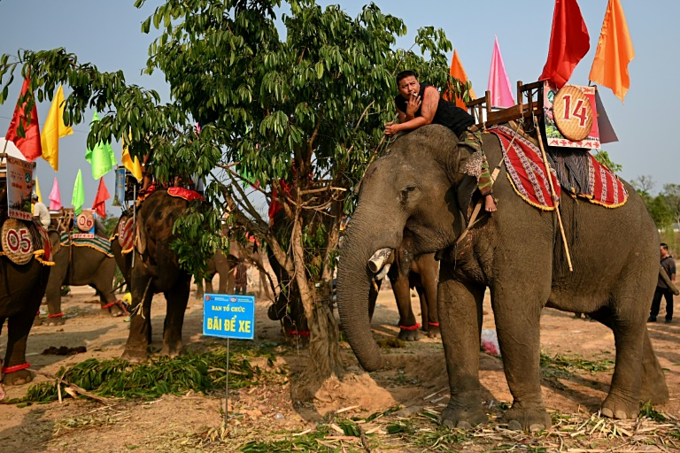 A mahout smokes a cigarette while sitting atop his elephant before the race during the Buon Don festivalaption]