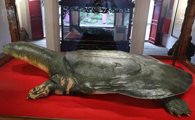 Vietnam's legendary giant turtle plastinated for life