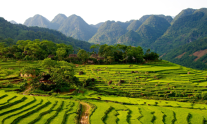 Vietnamese, Lao provinces to offer joint tours