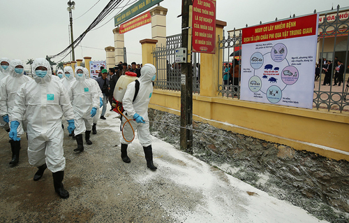 FAO calls on Vietnam to declare swine fever a national emergency