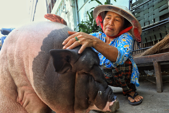 A pig lives like a king in Saigon - 8
