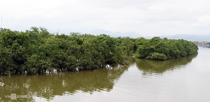 Part of the mangrove forest along the Kien Giang River. Photo by Quang Ha