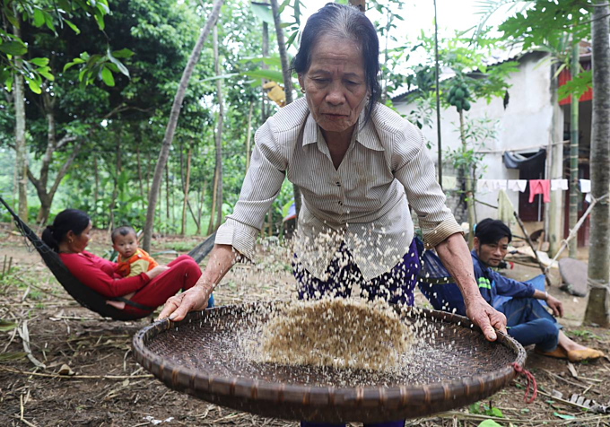 Hunting for ant eggs in Vietnam - 6