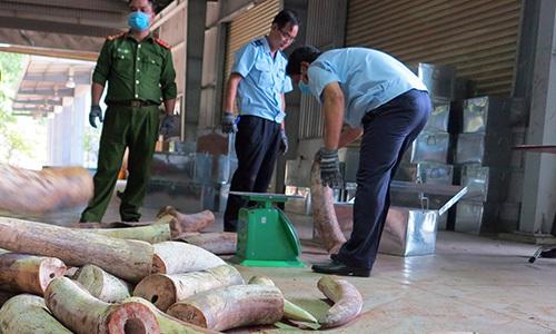 Da Nang customs seize nine tons of elephant tusks from Congo