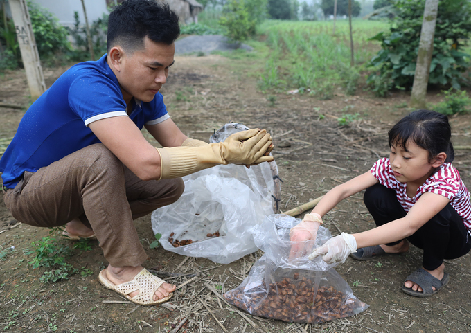 Catching stink bugs for food in central Vietnam - 3