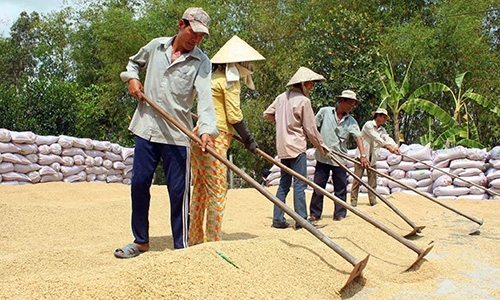 Rice drags Q1 agro-forestry-fishery exports down