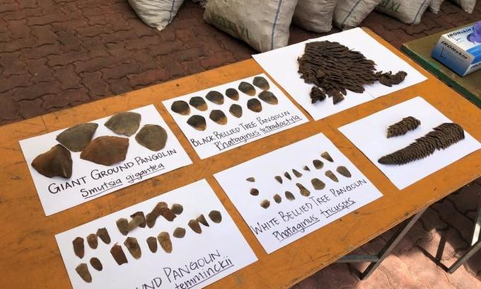 Singapore seizes record haul of pangolin scales enroute to Vietnam