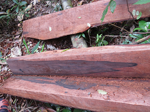 Vietnamese authorities probe illegal logging in world-famous national park