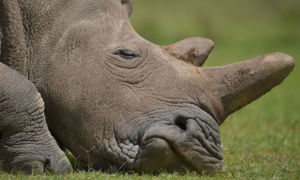Two arrested with 167 rhino horns in huge South Africa haul