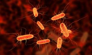Drug-resistant E. coli found in Vietnam