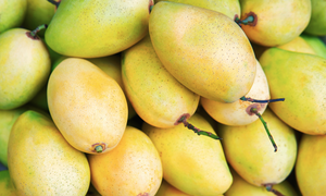 First Vietnamese mangos exported to US