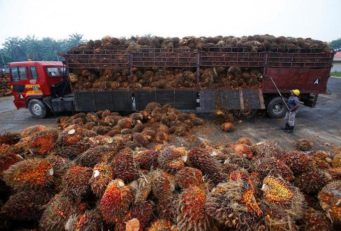 Singapore shoppers given tool to choose products using ethical palm oil