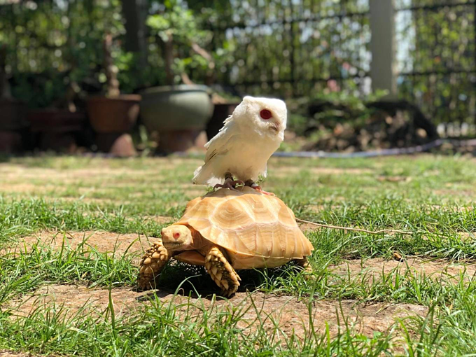 A home for pet reptiles becomes a mini zoo in southern Vietnam - 1