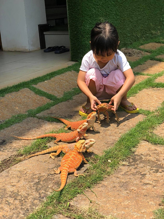 A home for pet reptiles becomes a mini zoo in southern Vietnam - 3