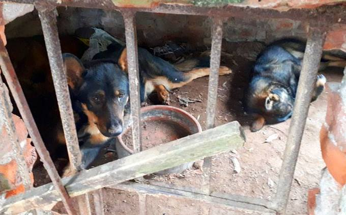 Dogs maul boy to death, owner faces manslaughter charges