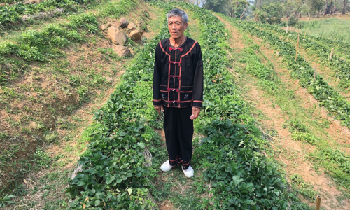 A new high: Indigenous Thai farmers swap opium for coffee, land