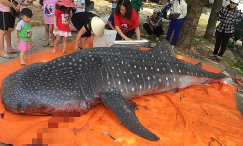 Vietnamese fishermen butcher endangered whale shark