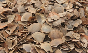 Eight tons of smuggled pangolin scales seized in Vietnam port
