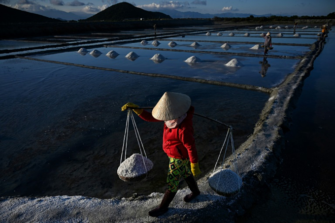 Vietnams salt farmers toil in the fields during the annual harvesting season from January to June. Photo by AFP/Manan Vatsyayana