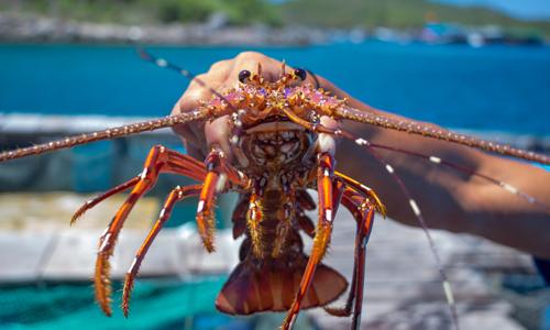 China scraps tariffs on 33 Vietnamese seafood items