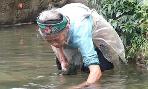 Thai ethnic minority woman ekes out a living gathering moss
