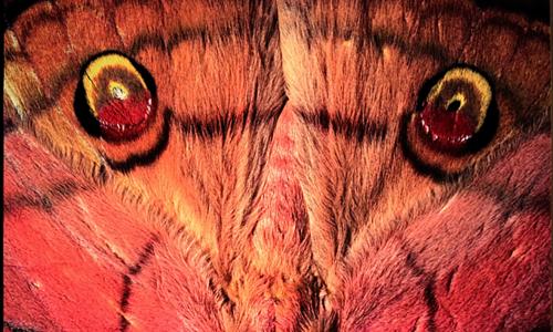 Hanoi photo exhibition celebrates Vietnam insect diversity