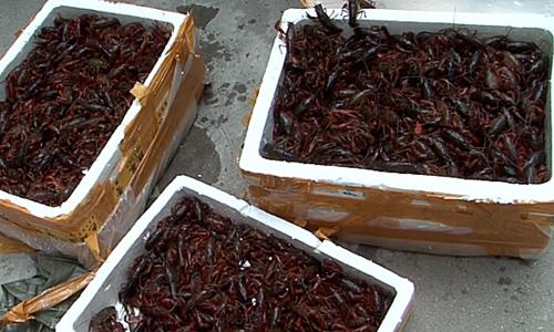 Vietnam to take legal action against crawfish breeding, trading