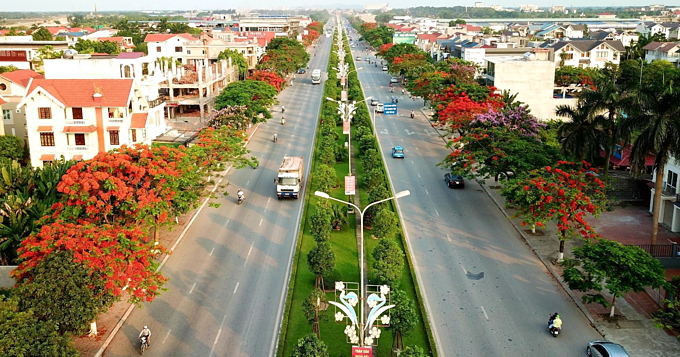 Red blossoms light up northern Vietnam city