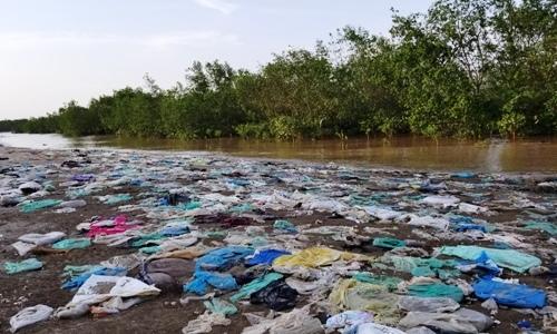 Garbage chokes northern Vietnam mangrove forests
