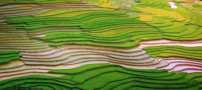 Scintillating sight: waterlogged fields in Vietnam's northern highlands