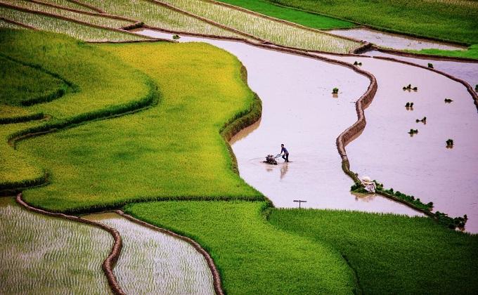 Scintillating sight: waterlogged fields in Vietnam's northern highlands - 1