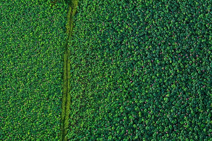 Vietnams lotus season attracts a swarm of Instagram bees (semi-edited) - 8