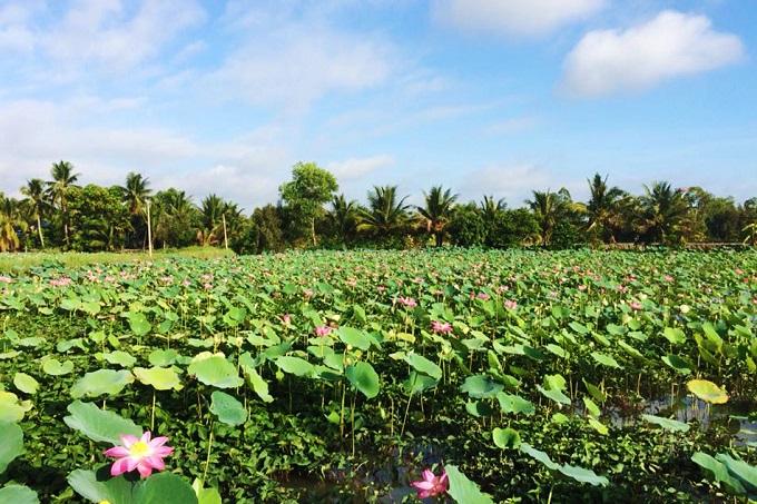 Lotus season attracts selfie bees - 7