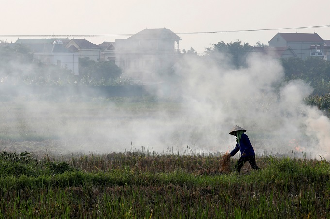 A farmer harvests rice in a paddy field outside Hanoi, Vietnam, June 10, 2019. Photo by Reuters/Kham.